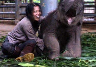 Sursa: https://www.elephantnaturepark.org
