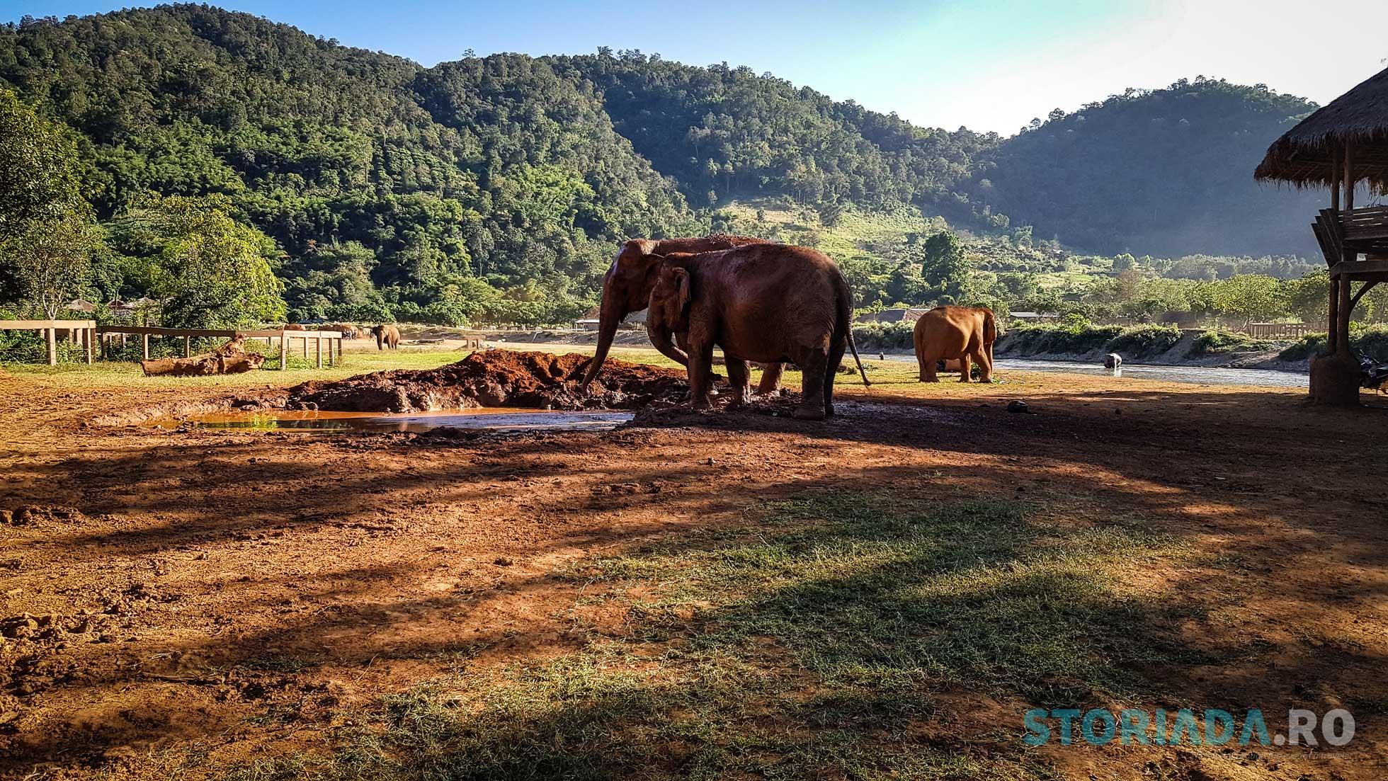 Elephant Nature Park, Chiang Mai, Tailanda
