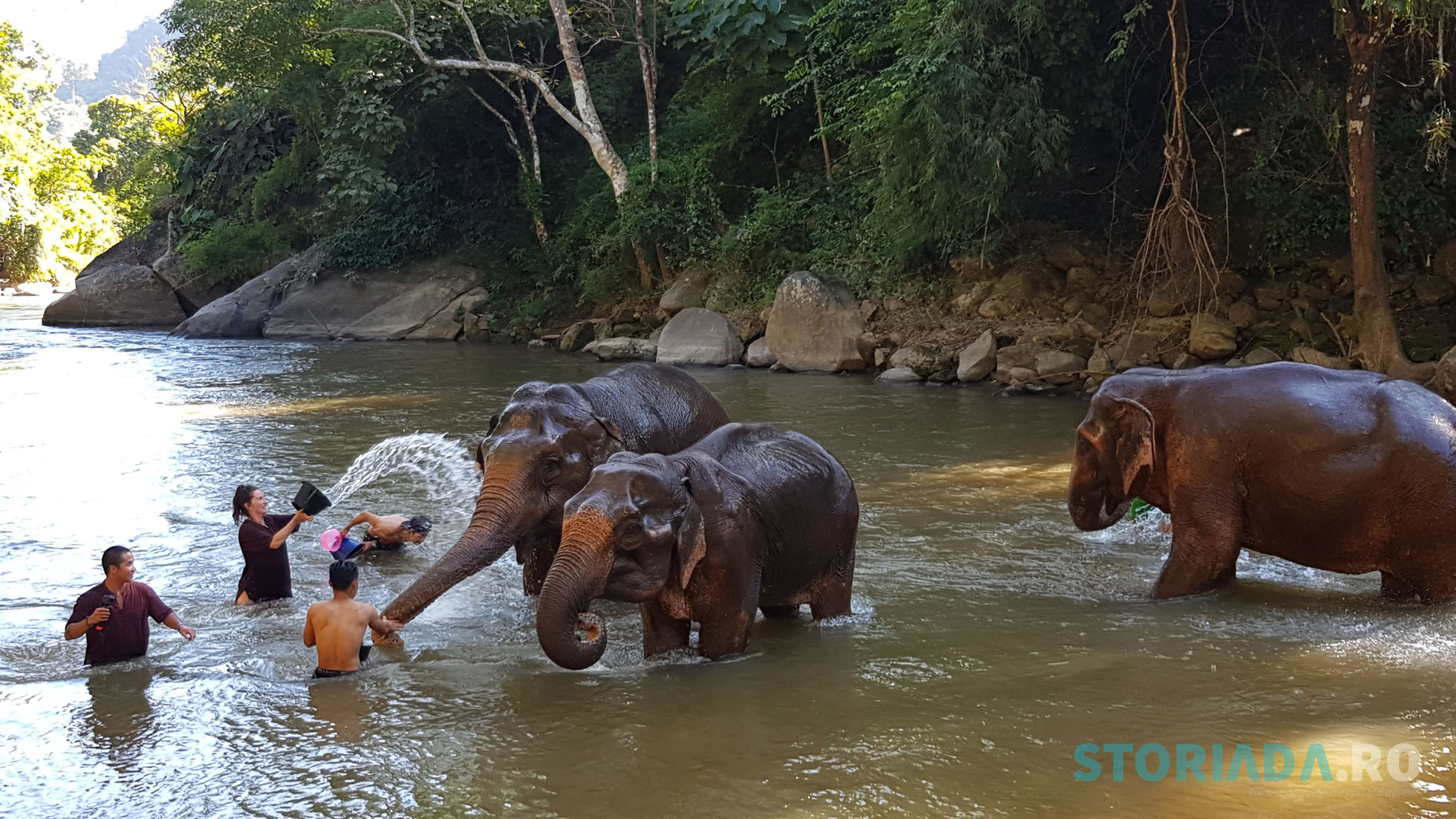 Sunshine with elephants, bath within the river, Thailand