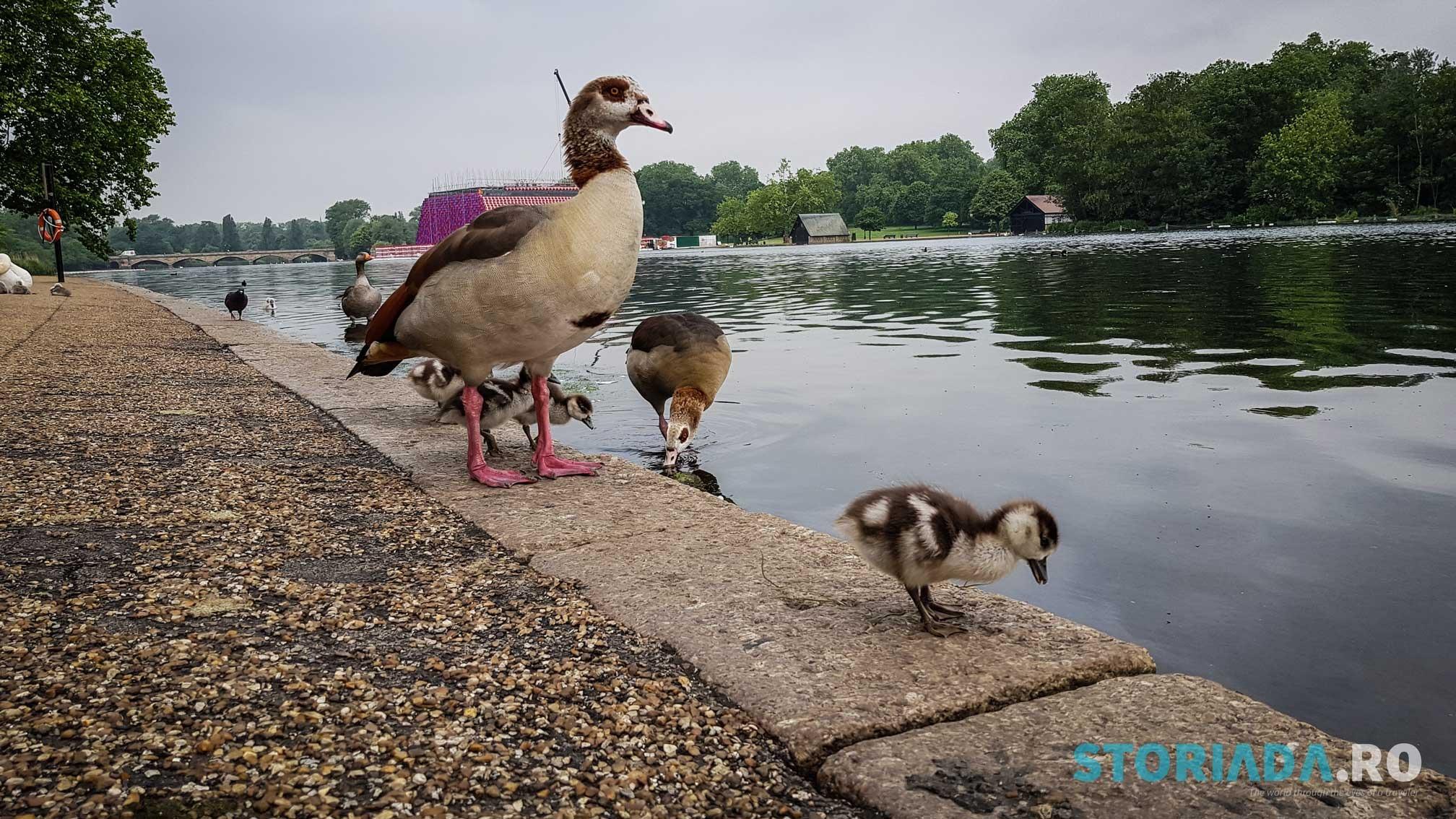 Viața din Hyde Park