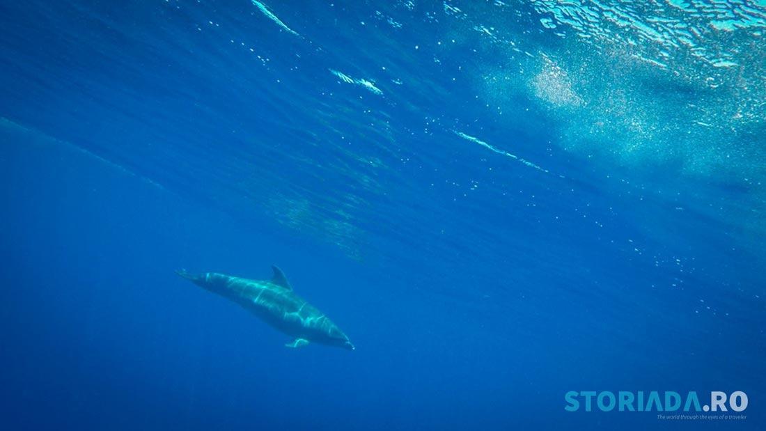Kayak cu delfiinii în Lost Cristianos, Tenerife