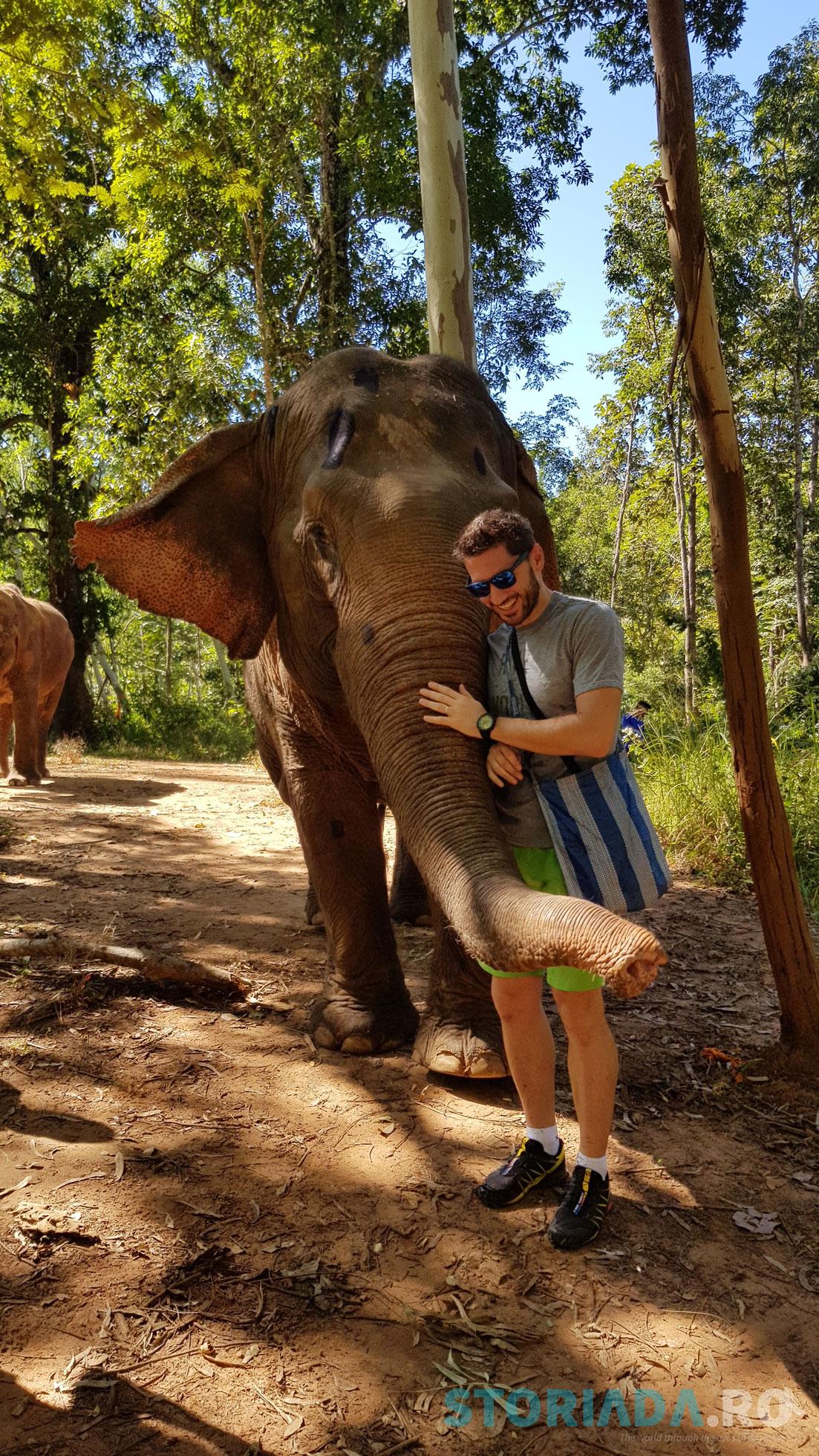 Wassana the elephant