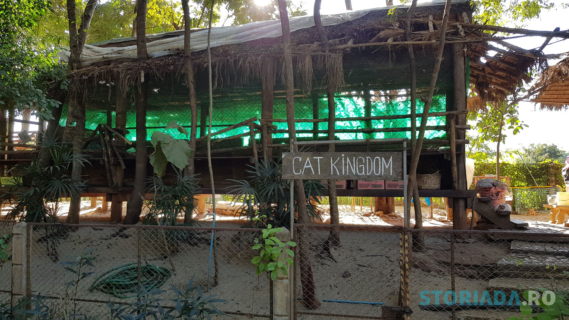 Cat Kingdom, Elephant Nature Park Sanctuary, Chiang Mai, Thailand
