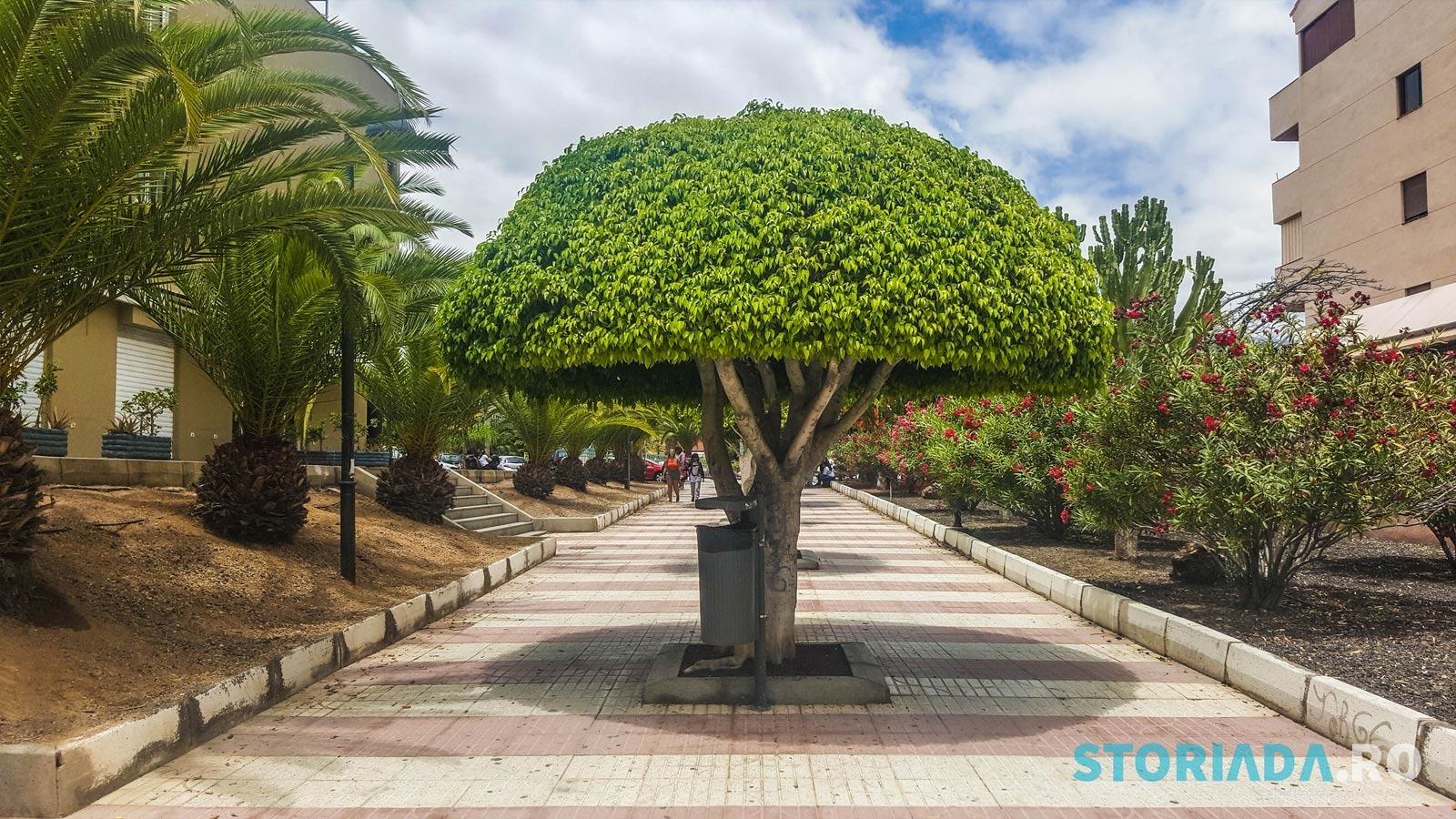 Los Cristinaos, Tenerife, Iunie 2017